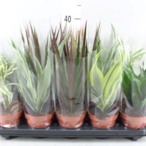 PLANTS GREEN MIX